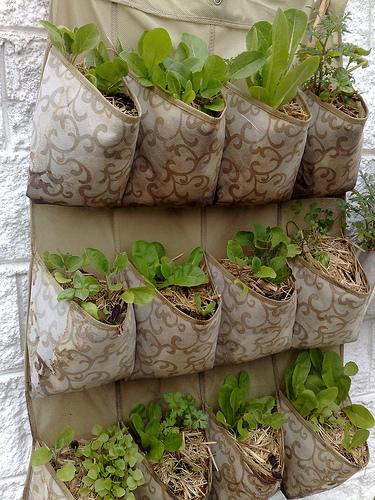 Garden Design & Homestyle Ideas   Garden Designer   Scoop.it