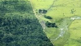 La deforestación del Amazonas conlleva la pérdida de las comunidades microbianas | Agua | Scoop.it