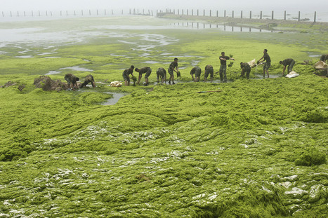 Disturbing Photos Show Why Algae Blooms Are A Growing Global Threat | Archivance - Miscellanées | Scoop.it