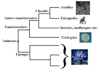 Évolution et complexité… Ce n'est pas simple !   Strange Stuff and Funky Things   Scoop.it