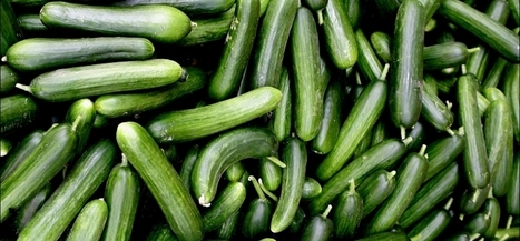 Jeugd wil kromme komkommers - PowNed | eetbaar amsterdam | Scoop.it