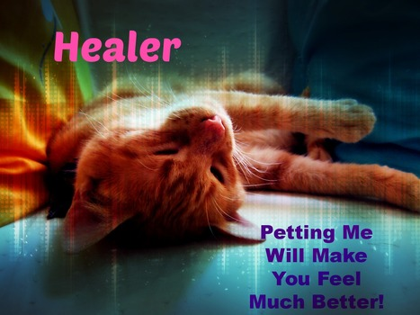 Earthcode: The Cat's Purr and Other Sounds that Heal   veterinarian   Scoop.it