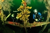12 Wrecks You Should Dive | Diving Destinations | Scoop.it