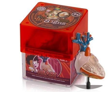 Educational Biology Kit to teach kids about functioning of heart | Educational Toys | Scoop.it