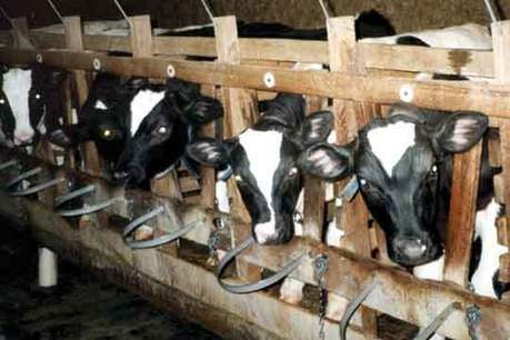 Factory Farming Is Destroying Our Environment | Plant Based Transitions | Scoop.it