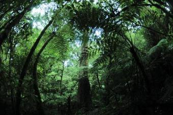 Las especies invasoras provocan daños de 1,4 billones de dólares anuales | EFEverde | Agua | Scoop.it