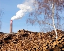 Destroying Forests For Biomass | CLIMATE CHANGE WILL IMPACT US ALL | Scoop.it