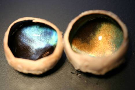 BBSRC mentions: British scientists discover reindeer eyes change colour from gold to blue over course of the seasons | BIOSCIENCE NEWS | Scoop.it