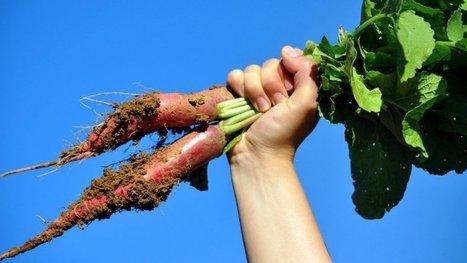 Adoubée par le trés sérieux Inra, la permaculture entre enfin dans la cour des grands ! | Damien CADOUX | Scoop.it