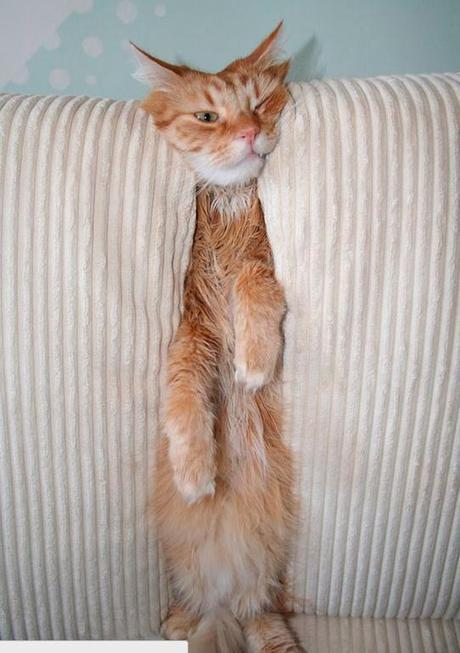 20 Dogs and Cats That Can't Figure Out Human Furniture | Pleated ... | Cats | Scoop.it