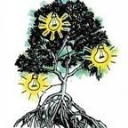 De la lumière grâce à la mangrove | Une Saison en Guyane | Mangroves | Scoop.it