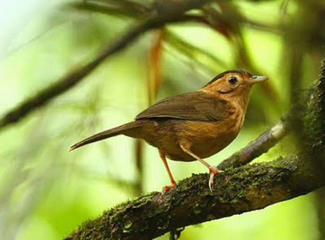 Are You Intrested to See Bird Watching in Sri Lanka | Dreamroundtour | Scoop.it