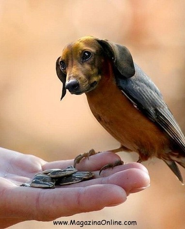 11 DIRDS – Images of Birds With Dog Heads Amazing Photoshopped Images   MagazinaOnline.com   Scoop.it