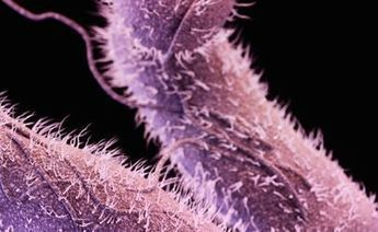 The Search for Alternatives to Antibiotics - Food Safety News | vibativ | Scoop.it