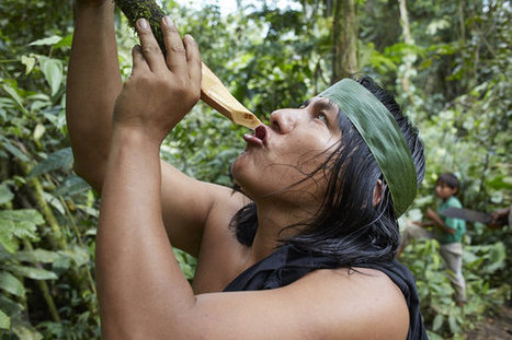 In The Amazon, Scientists Seek A Cure For Autoimmune Disease | ayahuasca | Scoop.it