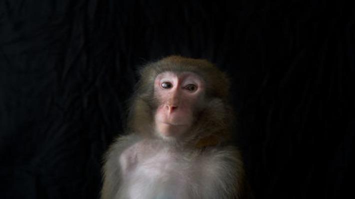 Comprendre l'intelligence animale, avec le grand éthologue et biologiste Frans de Waal | France Inter | Kiosque du monde : A la une | Scoop.it