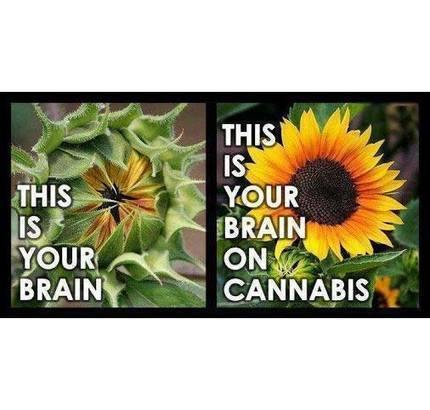 Timeline Photos   Facebook   Marijuana - Bongs - 420 - Funstuff - Cannabis   Scoop.it