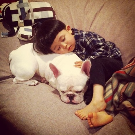 Sweet friendship between a boy and his french bulldog | Pictures | Cultural Trendz | Scoop.it