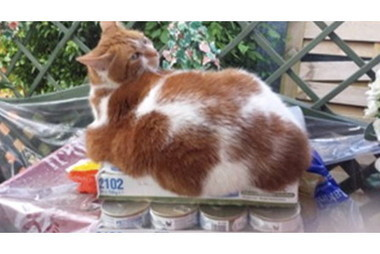 Overweight pets from Derby shed pounds in diet challenge | This is ... | Animal Science | Scoop.it