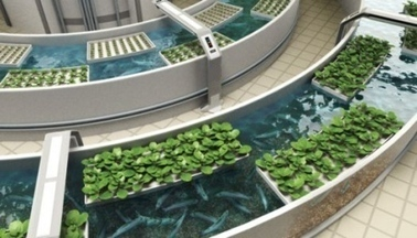 Local resident promotes aquaponic farming methods - Local - ChipleyPaper.com | aquaponic | Scoop.it