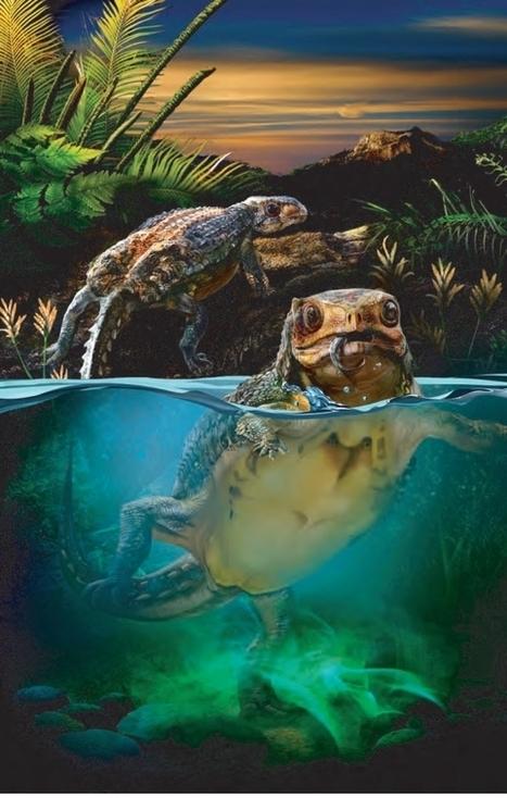 Du rififi chez les ornithischiens : certains ankylosaures aimaient-ils les oméga-3 ? : : Le Dinoblog | C@fé des Sciences | Scoop.it