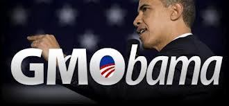 Meet Monsanto's number one lobbyist: Barack Obama | YOUR FOOD, YOUR HEALTH: Latest on BiotechFood, GMOs, Pesticides, Chemicals, CAFOs, Industrial Food | Scoop.it