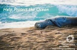 Ocean Conservancy – Marine Wildlife and Seascape Photo Contest   ShadowChief   Scoop.it