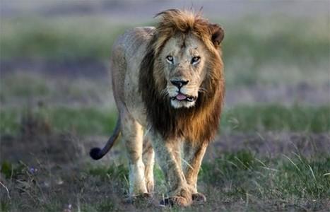 PETA Slams CBS For Using Live Animals in New Show | GarryRogers NatCon News | Scoop.it