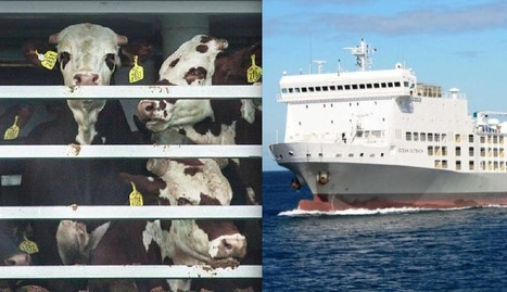 13,000 Animals Are Stranded At Sea Right Now And Nobody Is Talking About It   Nature Animals humankind   Scoop.it