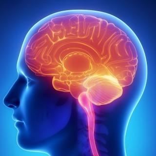 Novel Imaging Technique Elucidates Analgesic's Effect on the Brain | Médecine et sciences médicales | Scoop.it