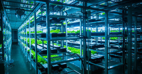 Why You Can't Have Organic Food Without Soil | Civil Eats | Organic Farming | Scoop.it