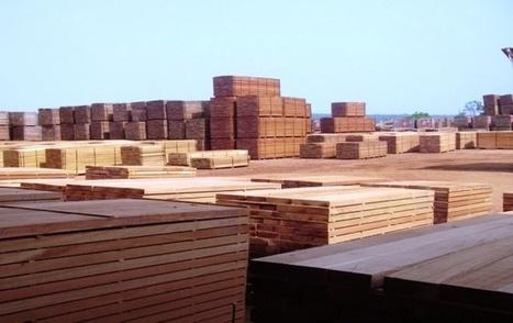 Filière bois : L'industrialisation en débat - Gabonreview.com   Actualité du Gabon     Confidences Canopéennes   Scoop.it
