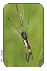 Vers la création de Réserves Naturelles privées… | EntomoNews | Scoop.it