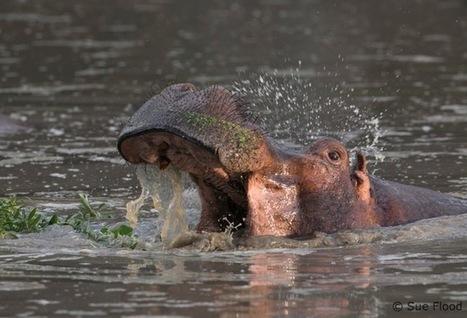"Top Wildlife Photography Tips From Sue Flood - ePHOTOzine (press release) | NIALA TUANER ""Hobbyist Wildlife Photographer"" | Scoop.it"
