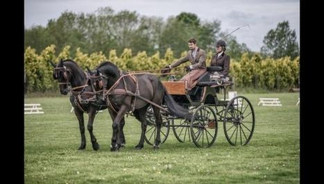 Genech : Les chevaux de trait ont offert un spectacle d'élégance et d'équilibre   Cheval et sport   Scoop.it