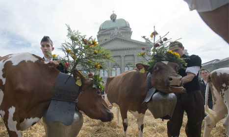 Den Bauern droht eine Schocktherapie | Schweizer Milchwirtschaft | Scoop.it