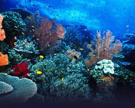 5 coolest diving spots in Asia - LifestyleAsia | Travel around best places in Asia | Scoop.it