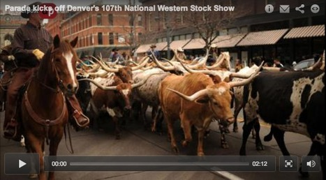 Denver's 107th National Western Stock Show Parade | Horse and Rider Awareness | Scoop.it