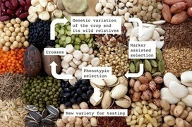 PLOS Biology: Where Have All the Crop Phenotypes Gone? | Plant Gene Seeker -PGS | Scoop.it