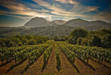 Vignobles du Monde : l'Italie - Magazine du vin - Mon Vigneron | Actualités du Vin | Scoop.it