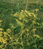 Les plantes communiqueraient par des clics sonores | sound mostly | Scoop.it