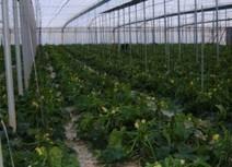 » Agricultura protegida, el futuro de la producción de alimentos   Hecho en México   Scoop.it