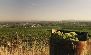 Austria 2012 vintage: 'small, but high-quality' | Vitabella Wine Daily Gossip | Scoop.it