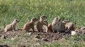Grasslands | Temperate Grasslands | Defenders of Wildlife | Trmperate grasslands | Scoop.it