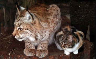 Daily Cute: Stray Cat Finds an Unlikely Friend at the Zoo - Care2.com | Caring for Cats | Scoop.it