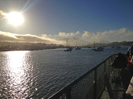 Group Cruises a San Francisco Treat | Trend of the Week: Dogs at Meetings | Scoop.it