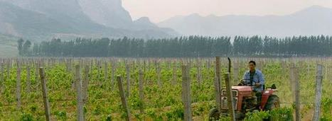 China Overtakes France in Vineyard Area | Wine News & Features | Grande Passione | Scoop.it