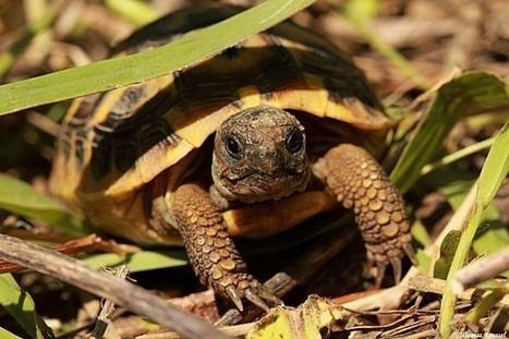Les reptiles du sud-est de la France   Ecological   Scoop.it