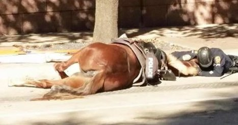 Emotional Photo Captures Police Officer Comforting His Dying Horse | Xposed | Scoop.it