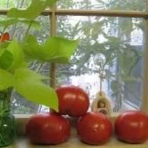 Tomato Pie Recipe   Recipe Sharing   Scoop.it